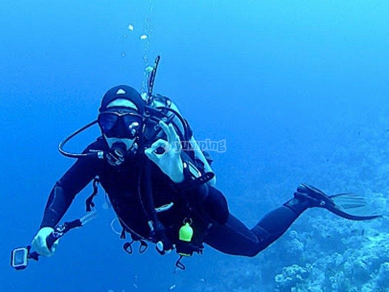 Recorre y observa las maravillas que el Océano guarda al fondo
