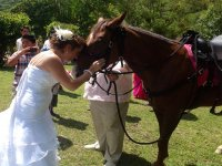 Horses for events