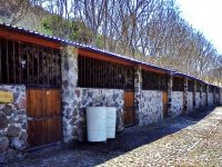 Pension of horses
