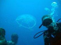 Una medusa