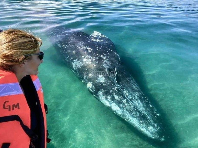 Vive la experiencia de interactuar con la ballena azul