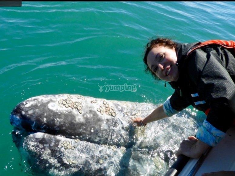 Ten la oportunidad de estar cara a cara con una ballena azul