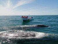 Navega por el océano pacífico