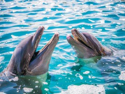 Nado con delfines en Ixtapa Zihuatanejo 2 horas