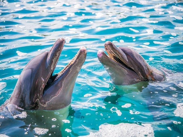 Experiencia de nado con delfines en Ixtapa