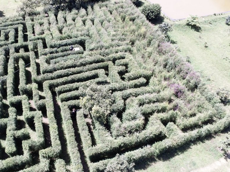 Go through the labyrinth and discover the route to get out