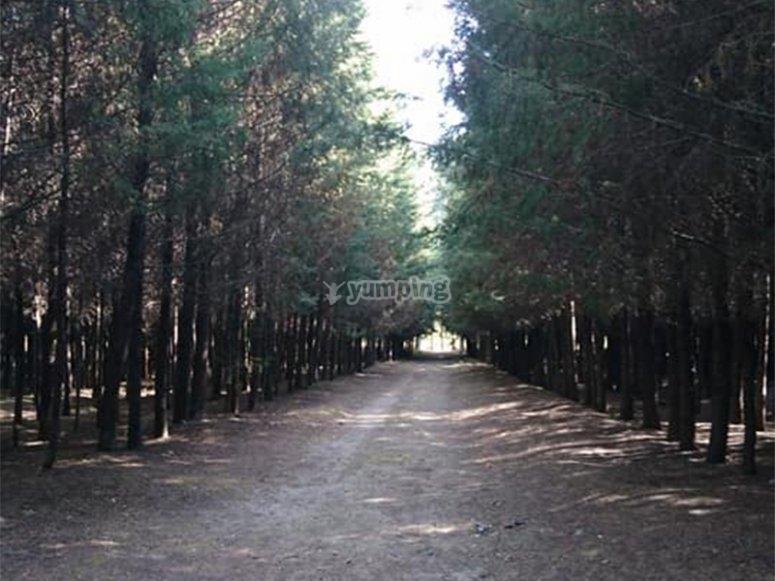 Walk the paths inside the park