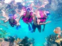 Corals in the Riviera Maya