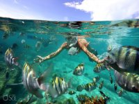 Swim in the Cancun reef