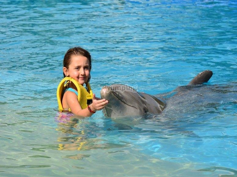 Niña nado con delfin
