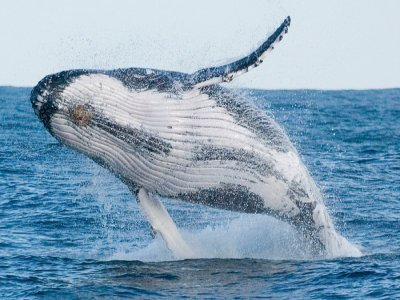 Sea Fever Sportfishing Whale Watching
