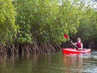 Kayaking en manglar