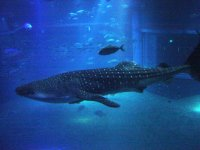 View with the whale shark
