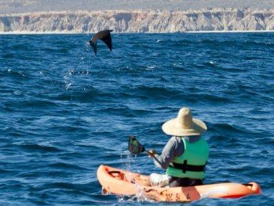 Cabo Pulmo Sport Center Kayaks