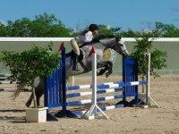 Cursos de equitacion
