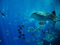 Descubre un mundo marino