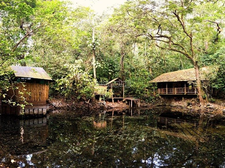 Disfruta de nuestras preciosas cabañas dentro de la selva