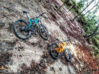 Bicicletas de montaña en el bosque