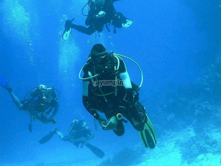 Sal en grupo a explorar el fondo marino