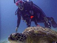 Descubre de la vida marina