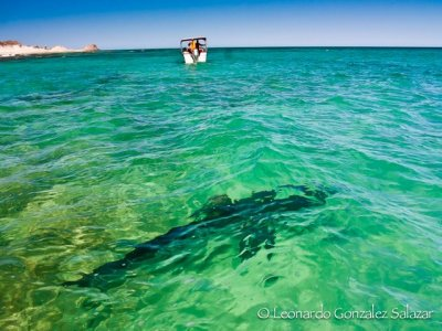 Cabo Pulmo Watersports Paseos en Barco