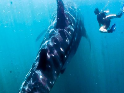 Cabo Pulmo Watersports Snorkel