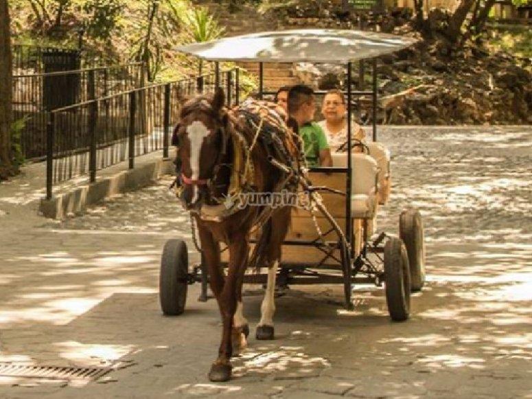 Carreta de caballo