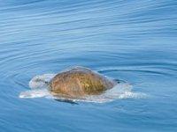 Encuentros con tortugas