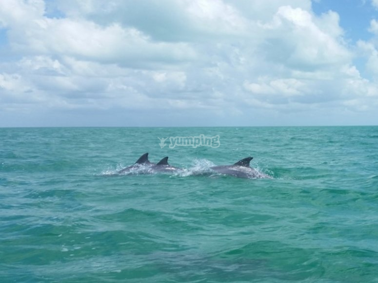 Be lucky enough to see the dolphins