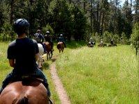 Cabalgata por el bosque