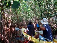 paddling in mangroves