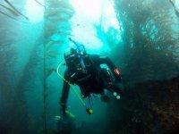 Diving between gardens