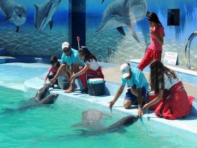 Nado con delfines en León, Guanajuato