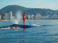 Con ballenas