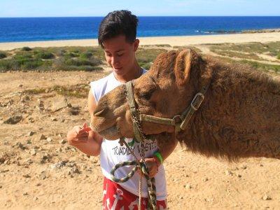 Paseo en Camello por Los Cabos por 2.5 horas niños