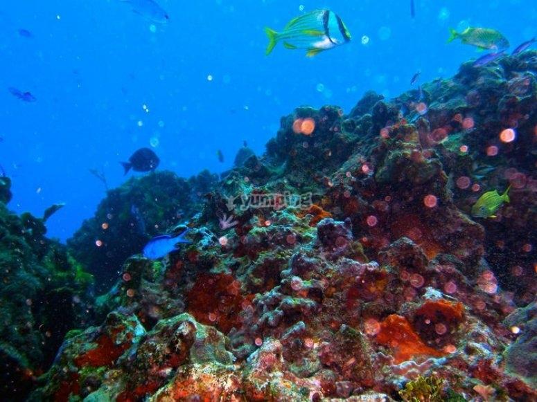 Fondo marino de Isla Mujeres
