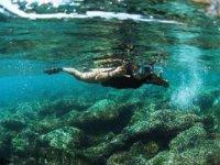 Snorkelea in Ixtapa