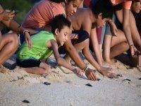 Turtle Liberation Beach