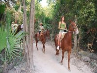 Our guided horseback riding