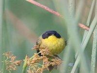 Bird discovery
