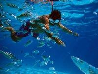 hacier snorkel en arrecifes de veracruz