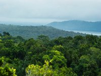 Mayan jungle in Quintana Roo