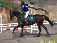 In equestrian competition