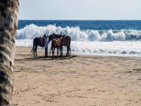 Beach and horses for a walk