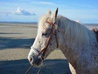 Horses and beach