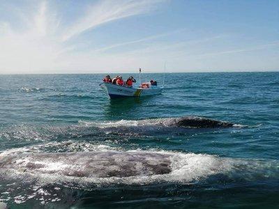 Bajaround Tours & Travel Whale Watching