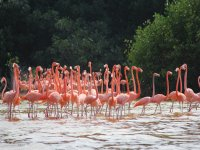 Go from afar to the flamingos