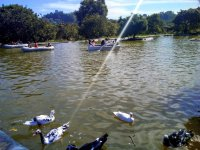 Aprovecha nuestro lago y recórrelo en un bote de remos