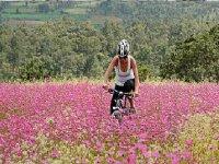 Flower Field Cyclist