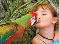 a kiss of piquito